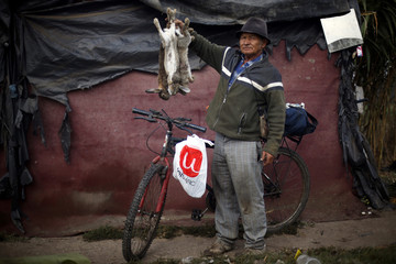 Rabbit hunter Orlando poses for a picture with rabbits he caught after a workday at the countryside near Santiago