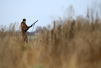 Hunter takes part a hunt in a field near the village of Novosyolki