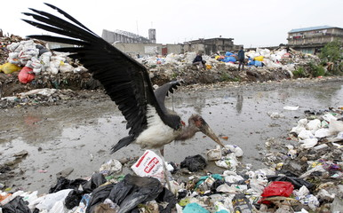 A one-legged marabou stork flies over a pile of garbage at the Dandora dumping site on the outskirts of Kenya's capital Nairobi
