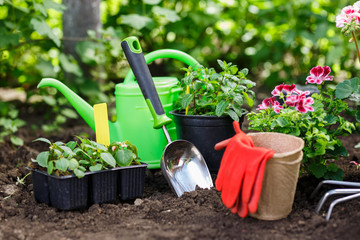 Gardening tools and flowers in pot for planting at backyard.