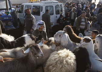 Palestinians gather at a cattle market ahead of the Eid al-Adha festival, in the West Bank city of Ramallah