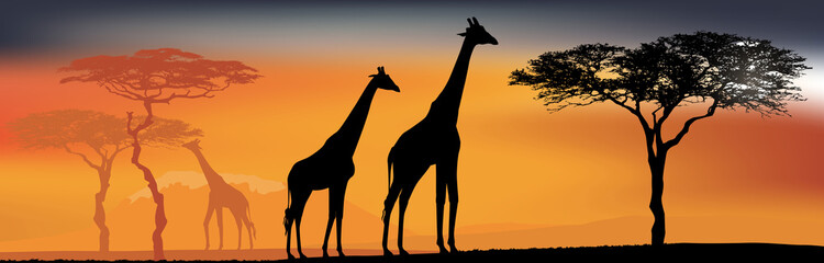 Desert view with giraffes. Background with African fauna and flora