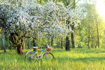 spring picnic at sunset/ bicycle with a book, a bottle and pastries in a basket, under a flowering fruit tree in the park