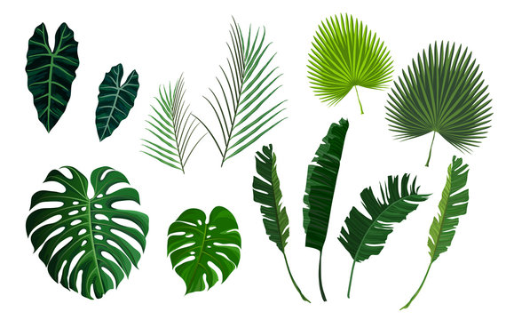 Vector tropical palm leaves, jungle leaves set