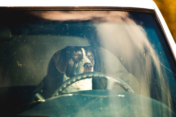 Dog in Driver Seat