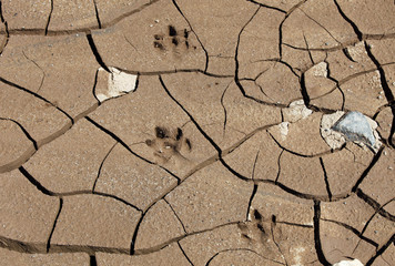 Footprints of a Cabypara are seen on the cracked grounds of the Jaguari dam, part of the Cantareira water supply system, in Joanopollis