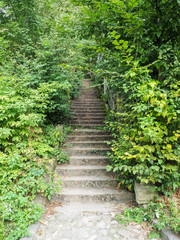 Stair in Sighisoara, surrounded by lush vegetation