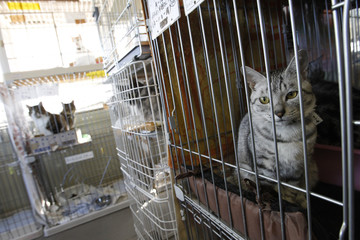 ATTENTION EDITORS - IMAGE 17 OF 18 TO GO WITH PICTURE PACKAGE 'FUKUSHIMA PET RESCUE'