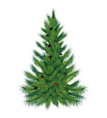 Single pine tree, isolated on white background. Vector