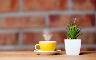 plant and cup of coffee