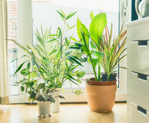 Houseplant Pots Arrangement at window in living room. Urban Living and styling with indoor plants.