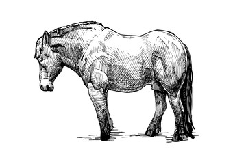 illustration of  draught horse