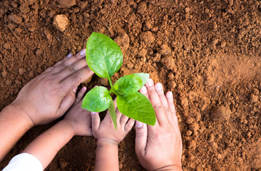 Close up Kid hand and father planting young plant