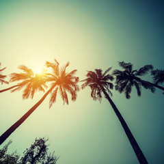 Coconut palm trees at tropical coast with vintage toned and film style.