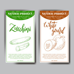 Food design with vegetable. Hand drawn sketch of white gourd and zucchini. Organic fresh product for card or poster design for cafe, market. Colorful vector illustration.