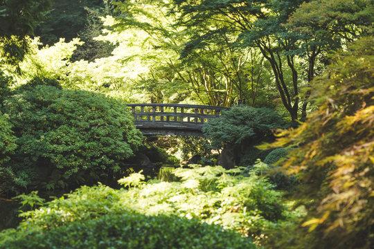 Lush Garden Plants with Stone Bridge