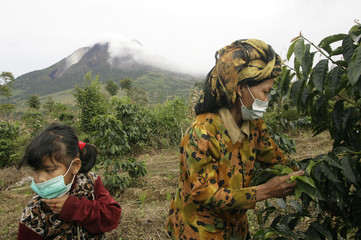 A mother and daughter pick coffee beans on their farm as Mount Sinabung volcano spews smoke in the background in Tiga Serangkai village