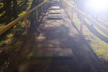 The wooden road planks in the forest, the sun shining white.