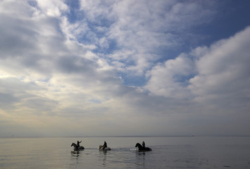 Circus Knie grooms walk their horses into lake Leman on an autumn morning in Lausanne