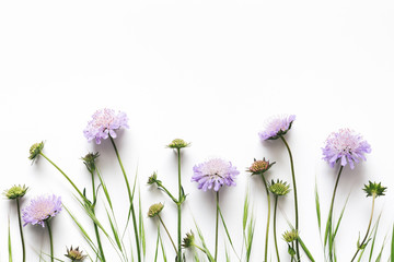 Purple Flowers On White Background