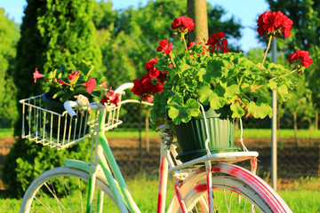 Decorative Vintage Model Old Bicycle Equipped Basket Flowers Garden.