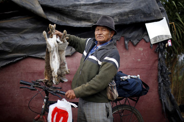 Rabbit hunter Orlando poses for a picture with his preys after a workday at the countryside near Santiago city