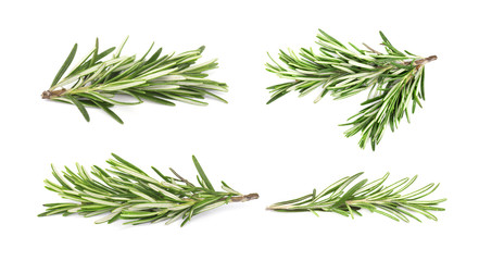 Fresh rosemary isolated. College