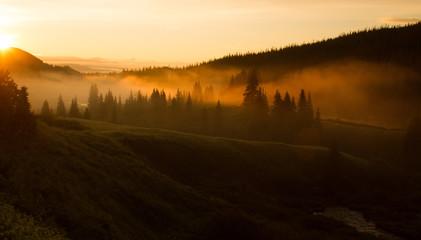 Wilderness Dawn
