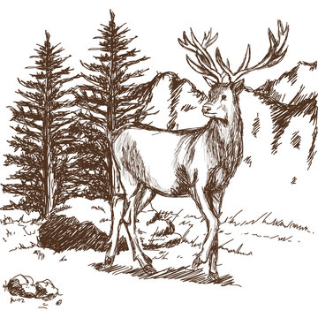 hand drawn deer big antlers, wildlife poster. graphic sketch vector illustration