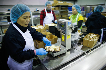 Workers package mushrooms at the Highline Mushrooms farm, Canada's largest mushroom grower in Leamington