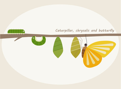 insect butterfly step illustration