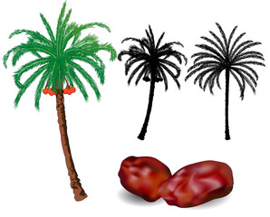 Dates Palm trees and fruit - vector illustration