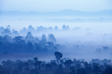 Aluminium Prints Blue sky Fog in forest at Thung Salang Luang National Park Phetchabun,Thailand