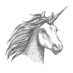 Unicorn vector sketch isolated head