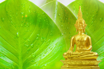 Buddhism statue ,field of green tree and sun in morning
