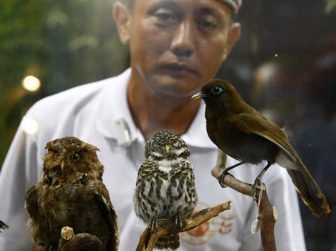 A man looks at a Mountain Scops Owl, a Collared Owlet and a Rufous Laughing Thrush from Taiwan during the Cross Strait Travel Fair in Taipei