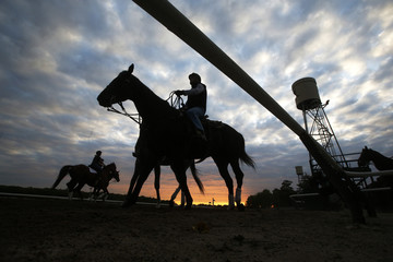Horses are seen in silhouette making their way to the track for morning workouts at Belmont Park in Elmont, New York