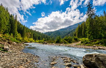 River among the forest in picturesque mountain landscape