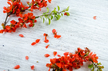 Composition from red flowers. Red flowers on a white wooden table.