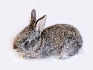 Photo of a small rabbit isolated on a white background