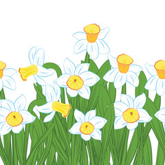 Postcard of green grass with blue and white narcissus flowers isolated on white. Vector illustration