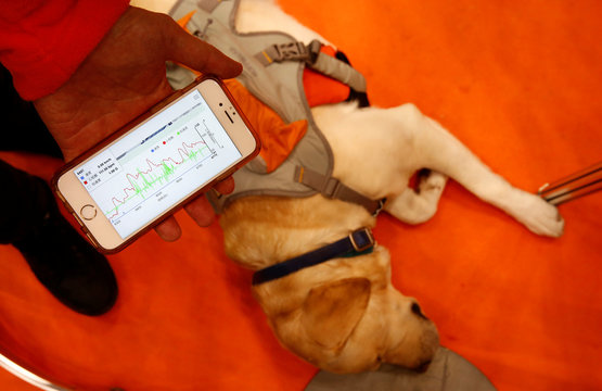 "A staff of Anicall shows an application informing about the pet's heartbeat, as he demonstrates the pet wearable device called ""Vital Suit"" during its demonstration at WEARABLE EXPO in Tokyo"
