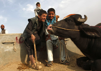 An Afghan boy smiles with another as he works at a livestock market in Kabul
