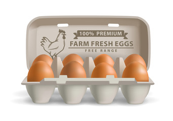 vector illustration eggs