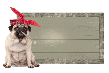 cute pug puppy dog being high on smoking marijuana weed joint, next to blank vintage wooden sign isolated on white background