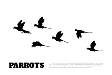 Black silhouette of a flock of parrots on white background. Animals of Australia