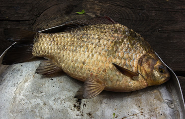River raw fish - carp, in a round plate