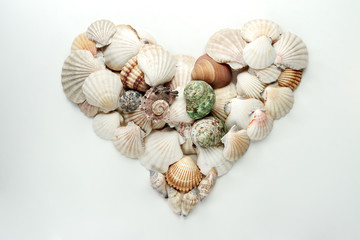 heart shaped seashells