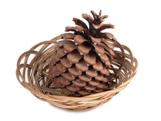 Big pine cone on a white background