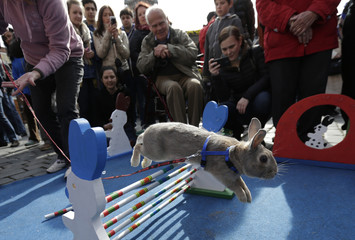 People look at a rabbit jumping over an obstacle at the traditional Easter market at the Old Town Square in Prague